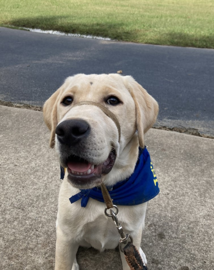 Jetson, Ms. Laura McGregor's new service dog in-training, smiles for the camera.