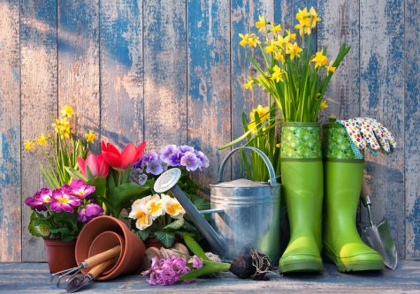 Blooming into Spring: Gardening Advice for Spring Planting