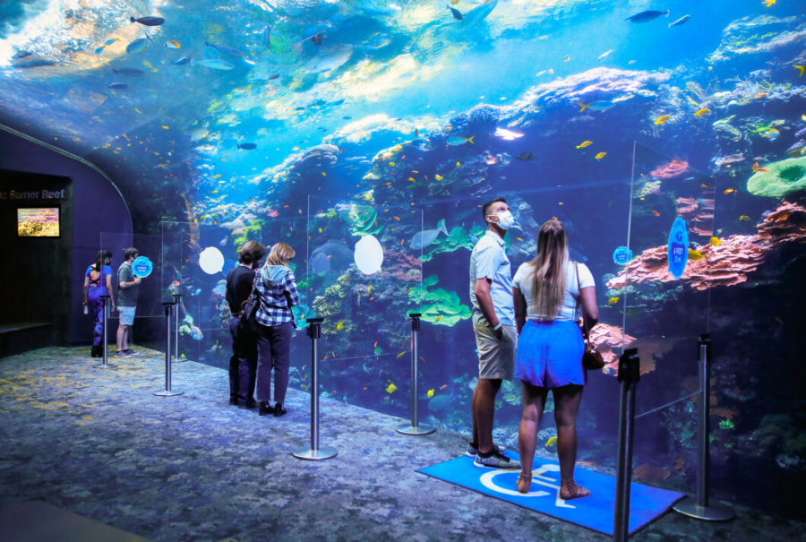 The Ocean Voyager exhibit at the Georgia Aquarium